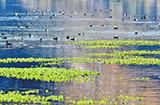 云南大理洱源县:湿地美景风光怡人