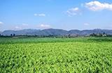 2017年云南省大理州农产品加工产值达276亿元