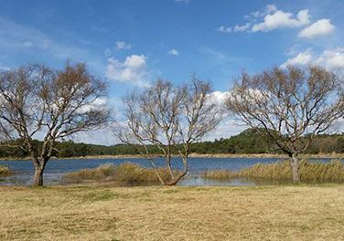 云南昆明:长湖之畔冬景迷人
