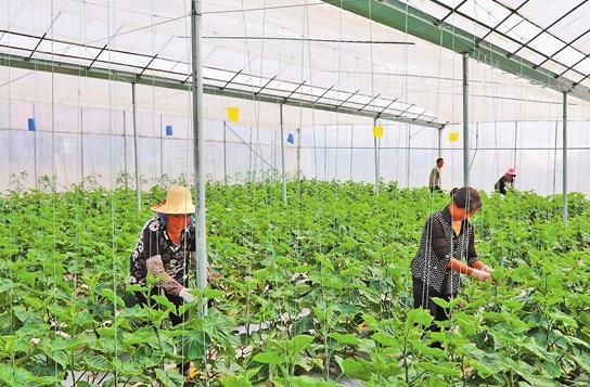弥渡大力发展设施农业