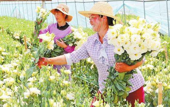 红河州特色花卉产业高效发展