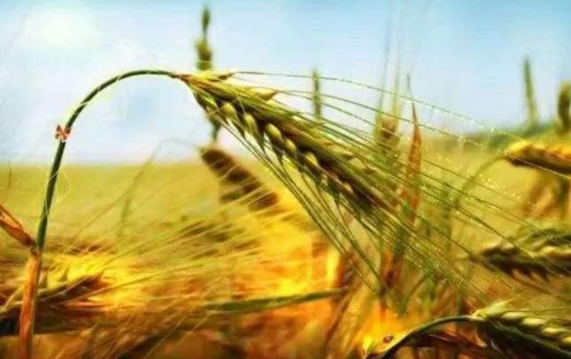 玉溪农业增速连续3年位居全省第一