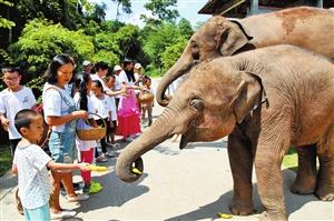 """30名志愿者做亚洲象""""保姆"""""""